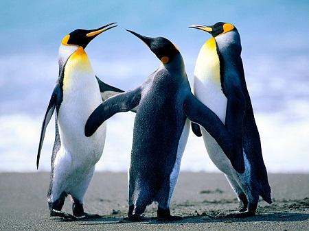 Penguins12.jpg